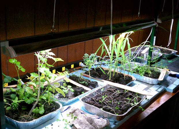 6 Best Ideas How To Extend The Garden Harvest Urban