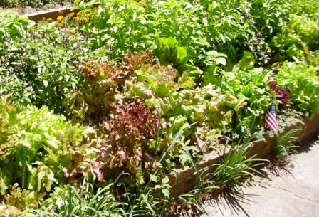 5 PERMACULTURE TIPS THAT WILL HELP INCREASE YOUR GARDEN YIELD