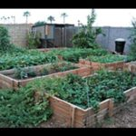 Secrets to a successfull urban garden with little work (VIDEO)