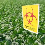 Organic Farmers Aware: Who Can Afford GMO Contamination?
