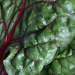 Swiss Chard: Easy to Grow and So Very Healthy