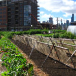 Things That Are Getting In The Way Of Your Urban Farm - And What You Can Do