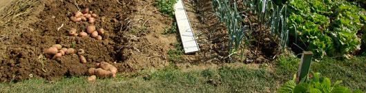 high-yield-garden