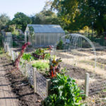 5 Reasons Why Urban Gardens Are Good For All of Us
